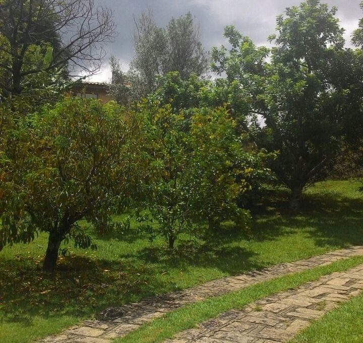 image5 (6)